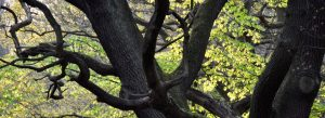 Tree trunk and spring leaves