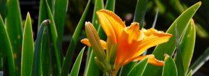 orange flower green leaves