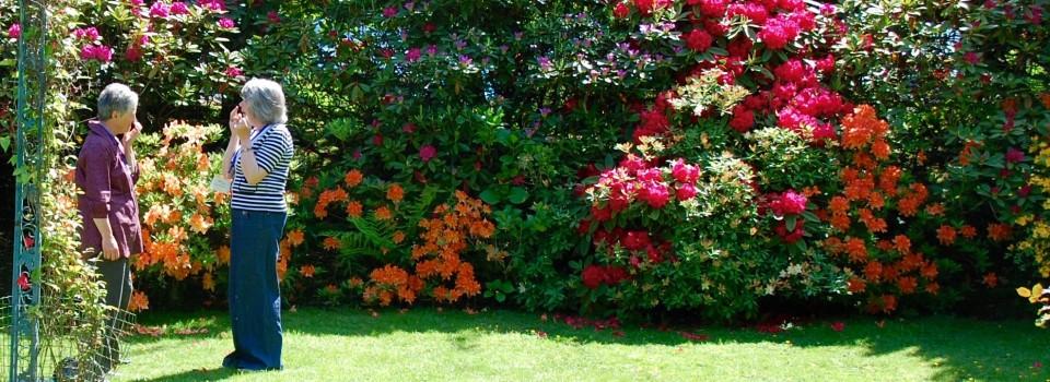 EFT tapping in garden